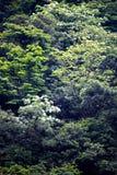 Fleur de Tung dans la for?t images libres de droits