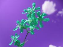 Fleur de turquoise d'une nouvelle vie Photographie stock libre de droits
