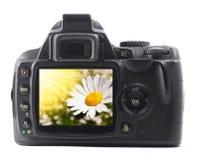 Fleur de vacances sur l'appareil-photo Images libres de droits