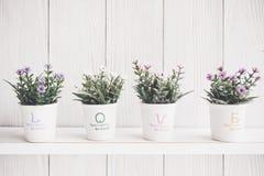 Fleur de Valentine Mur blanc en bois avec la fleur sur l'étagère pour des couples d'amant Photo stock