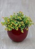 Fleur de vase Photo stock