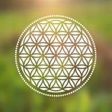 Fleur de vecteur de symbole de la vie sur un fond naturel Image libre de droits