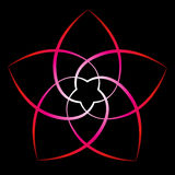 Fleur de Venus Red Black Background Photos stock