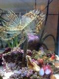 Fleur de ver d'eau de mer Image stock