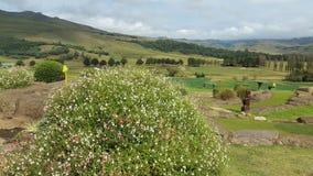 Fleur de vert de vallée image libre de droits