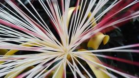 Fleur de ville Photo libre de droits