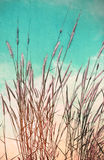 Fleur de vintage de l'herbe Photo libre de droits