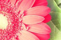 Fleur de vintage (macro) Images stock