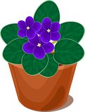 Fleur de violette africaine dans le pot Photos libres de droits