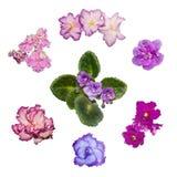 Fleur de violettes Image libre de droits