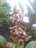 Fleur de Waite Photo stock