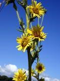 Fleur de widl d'été photo libre de droits
