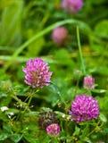 Fleur de zone images stock