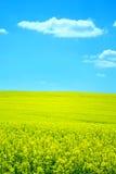 fleur de zone Photographie stock libre de droits