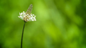 Fleur de zone Image stock