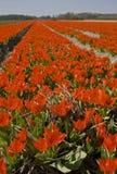 fleur de zone Photo stock