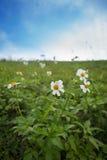 fleur de zone Photos libres de droits