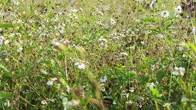 fleur de zone
