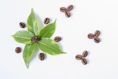 Fleur des feuilles vertes, grains de café photographie stock libre de droits