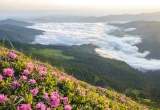 Fleur des rhodonendrons sur le premier plan et du brouillard dramatique sur le fond en montagnes photos libres de droits