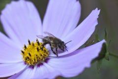 Fleur doucement bleue photographie stock