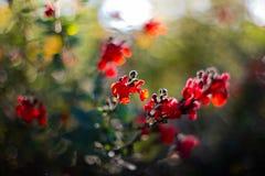 Fleur du jardin de l'arc du triomphe de Barcelone photographie stock libre de droits