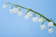Fleur du muguet Photos libres de droits