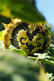 Fleur du soleil d'amour Photos stock