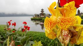 Fleur du tempel Royaltyfria Bilder