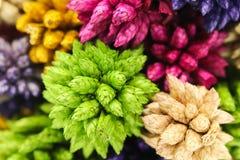 Fleur en épi sèche colorée de boule sur le fond blanc Image libre de droits