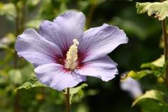 Fleur en été Images stock