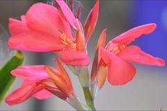 Fleur en fleur Image libre de droits