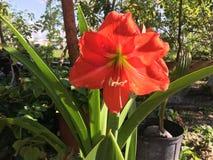 Fleur en fleur Images stock