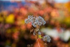 Fleur en automne Photo stock