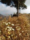 Fleur en bois photo stock
