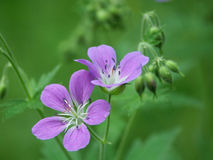 Fleur en bois images libres de droits