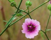 Fleur en Espagne Images stock