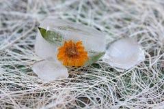 Fleur en glace Photographie stock