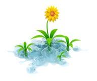 Fleur en glace Photo stock