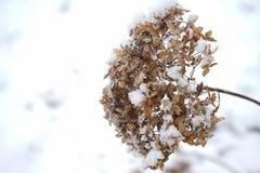 Fleur en hiver avec des cristaux de glace Image libre de droits