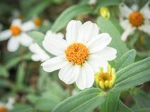 Fleur en nature Photos stock