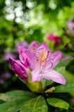 Fleur en parc Image libre de droits