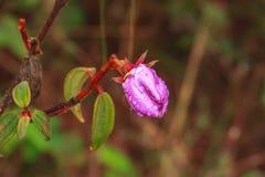Fleur en parc national de PhuKradueng photographie stock