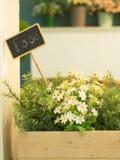 Fleur en plastique avec le conseil des prix dans la boîte en bois Photographie stock