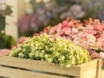 Fleur en plastique dans la boîte en bois Photographie stock