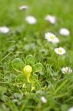 Fleur en plastique dans le domaine Image stock