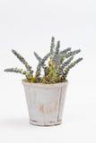 Fleur en plastique de vintage dans un pot Image stock