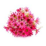 Fleur en plastique pour la décoration image libre de droits