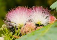 Fleur en soie Photos libres de droits