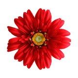 Fleur en soie Image libre de droits